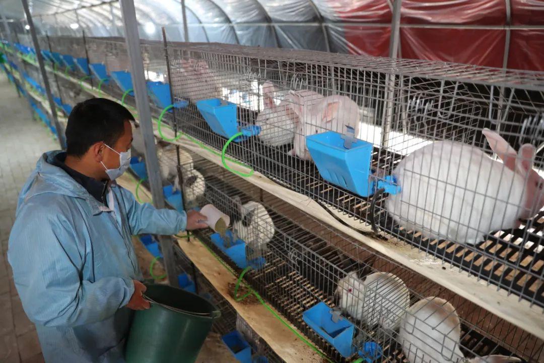 《国家畜禽遗传资源目录》专家解读?丨依法管理兔遗传资源 推进现代家兔种业发展