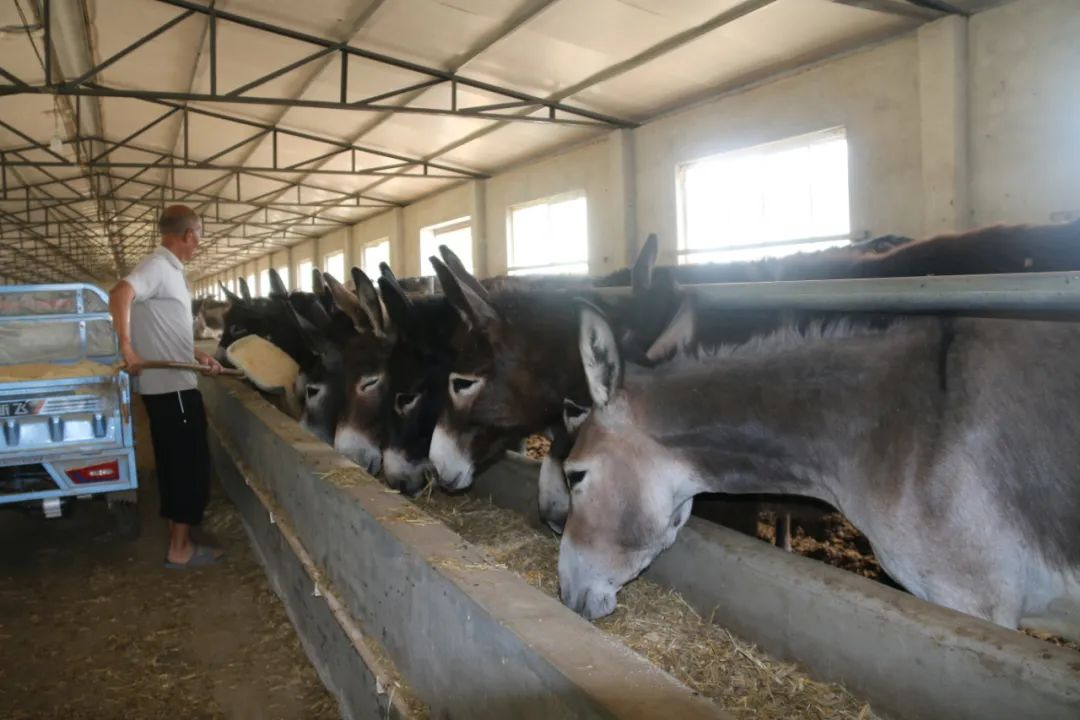《国家畜禽遗传资源目录》专家解读⑨丨种业创新助力马驴驼产业良性发展