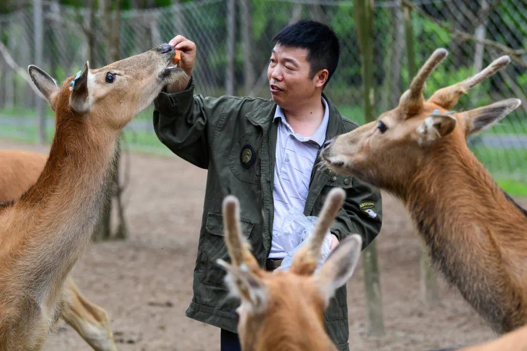 《国家畜禽遗传资源目录》专家解读⑩丨家养鹿产业迎来新的发展机遇