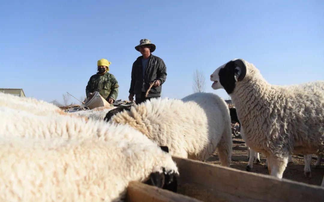 《国家畜禽遗传资源目录》专家解读⑧丨羊业迎来新机遇 种业发力正当时